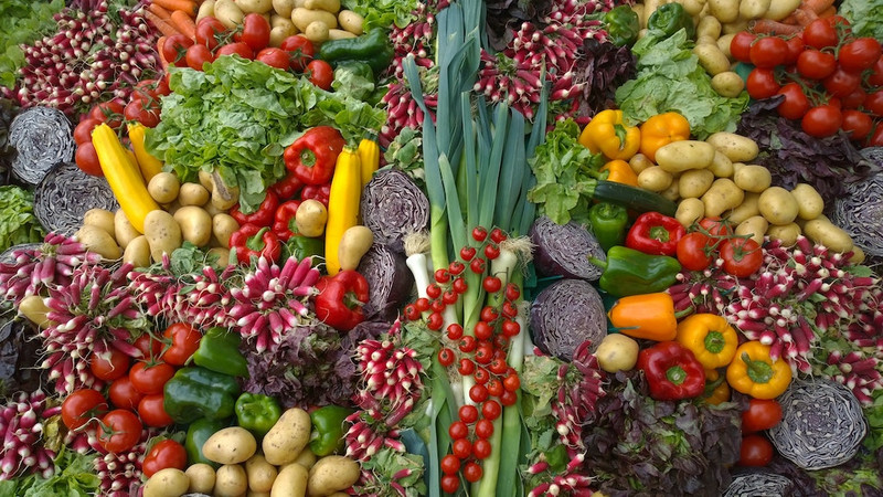 Plant Based Diet: Facts and Myths