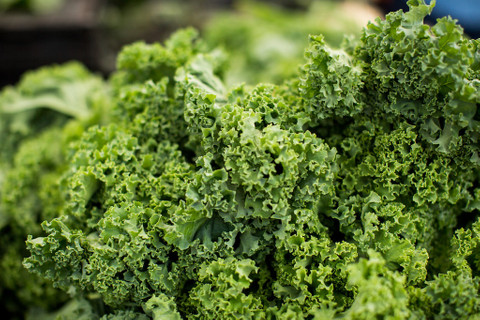 Seasonal Food: Focus on Kale Varietes