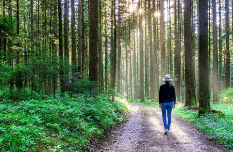 5 Benefits a morning walk has on your mind and body
